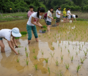 A pioneering sustainable development initiative for rural Hong Kong